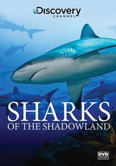 Žraloci z podsvětí