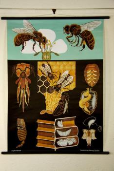 Krajina pro včely