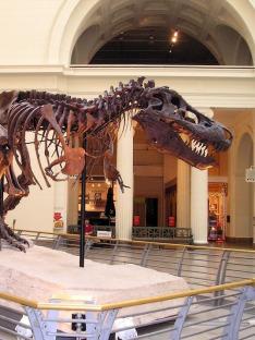Moderní dinosauři (6)