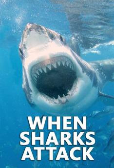 Když žraloci útočí IV (2)