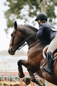 Jezdectví: Mezinárodní závody spřežení CAI Písečné nad Dyjí
