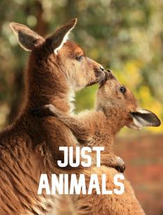 Prostě zvířata (9)