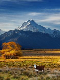 Záchranáři divokých zvířat: Nový Zéland (4)