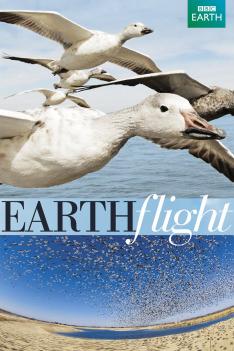 Zázračná planeta: Na ptačích křídlech kolem světa (5)